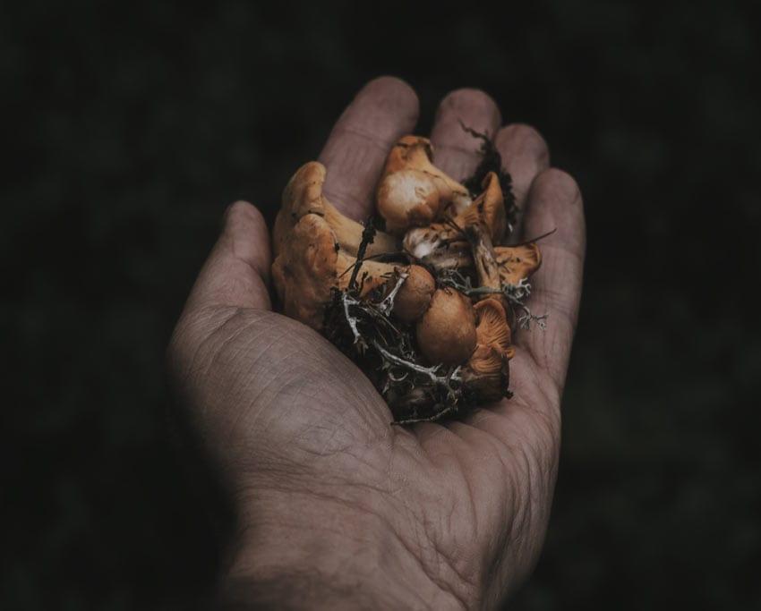 magic-mushrooms-wild-forest-canada